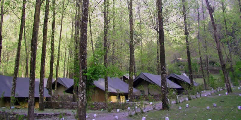 Experience a real jungle adventure in the hills of Uttarakhand, near Nainital.