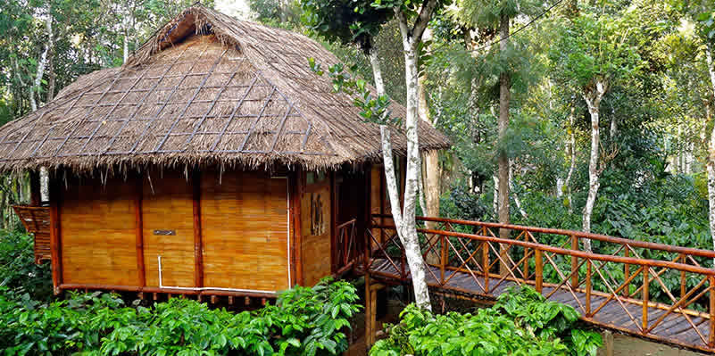Indulge your wild side in the tropical forests of Wayanad in Kerala.