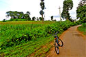 Cycling along the maize fields