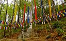 Prayer flags at the farm